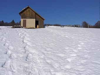 Randonnée Raquettes Plateau du Sornin - Rando's Rhône-Alpes - Dimanche 17 mars 2013